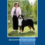 Meadowpark PhotoDesign